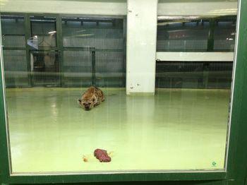 130816円山動物園2.jpg